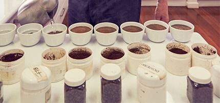 Cupping room - testing different coffee