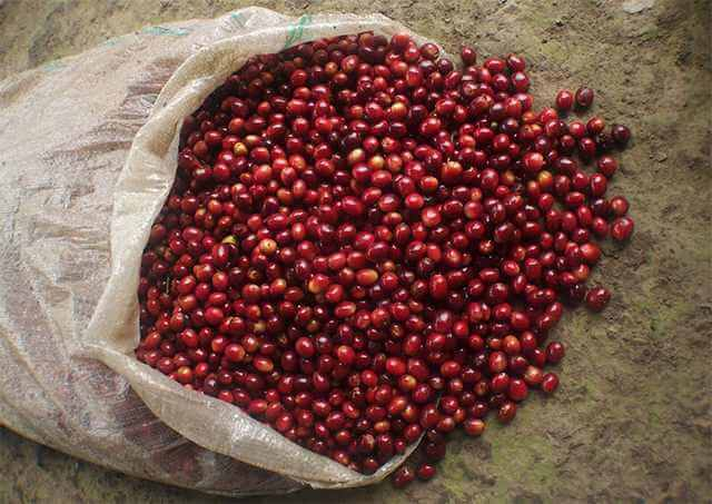 What Makes a Coffee 'Specialty'? 1