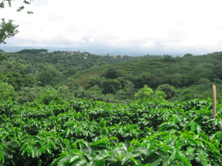Exploring Central American Origins: The Coffee Plantations of Costa Rica 4