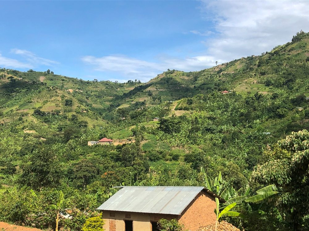 Rwenzori Coffee Farms, Uganda