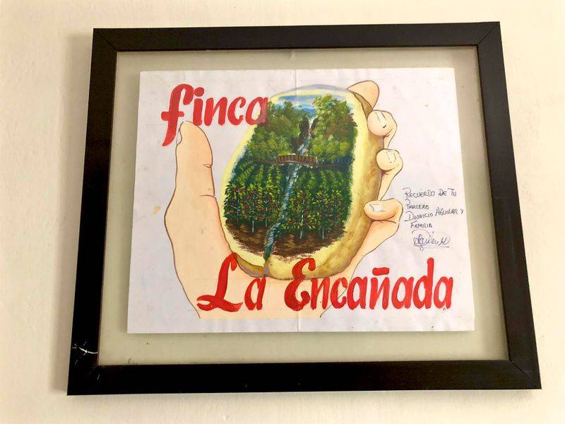 Coffee Field Report: Finca La Encanada, Peru 4